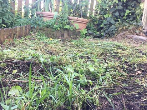 Abgeräumtes unbepflanztes Beet nach zwei Wochen mulchen