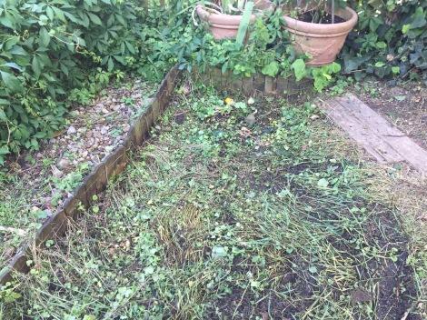 Abgeräumtes Mulchbeet unbepflanzt. Hier nochmal in der Totalansicht.