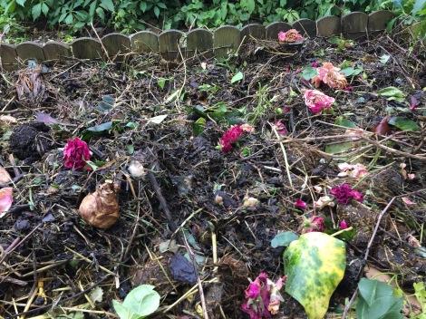 Die Mulchschicht aus Garten- und Küchenabfällen dient gleichzeitig der Flächenkompostierung